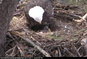 Snapshot from Eagle Cam
